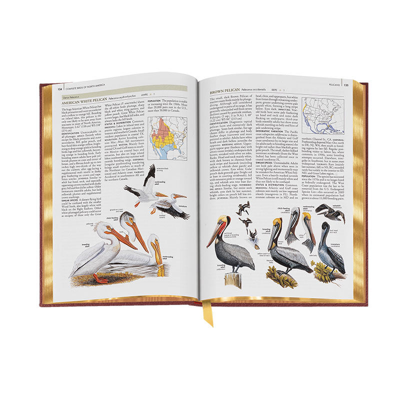 Complete Birds of North America 3596 2