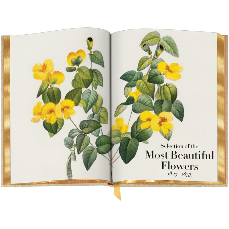 Book of Flowers 3704 f spr5 WEB