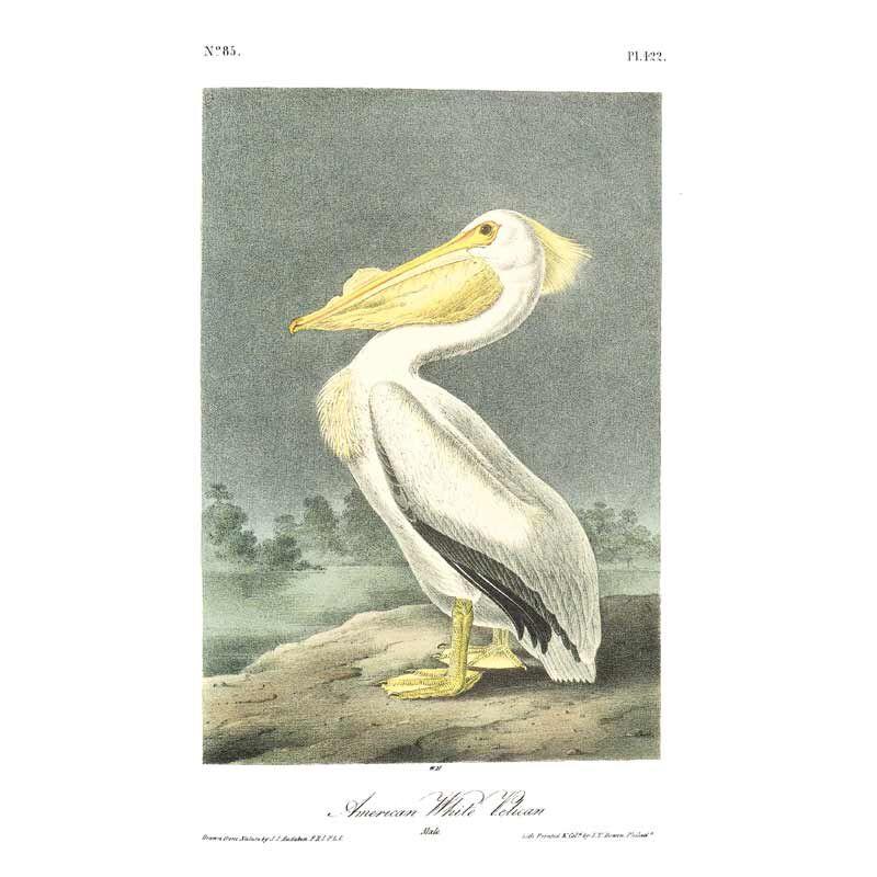 John James Audubons Birds of America 3201 15
