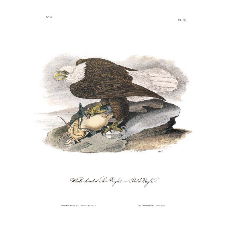 John James Audubons Birds of America 3201 9
