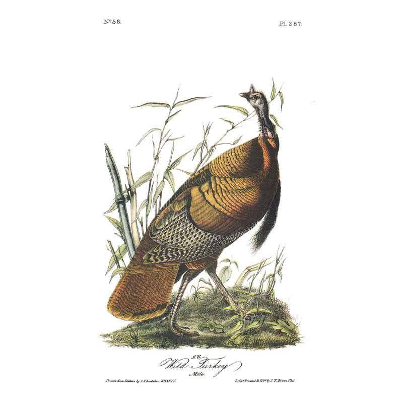John James Audubons Birds of America 3201 12