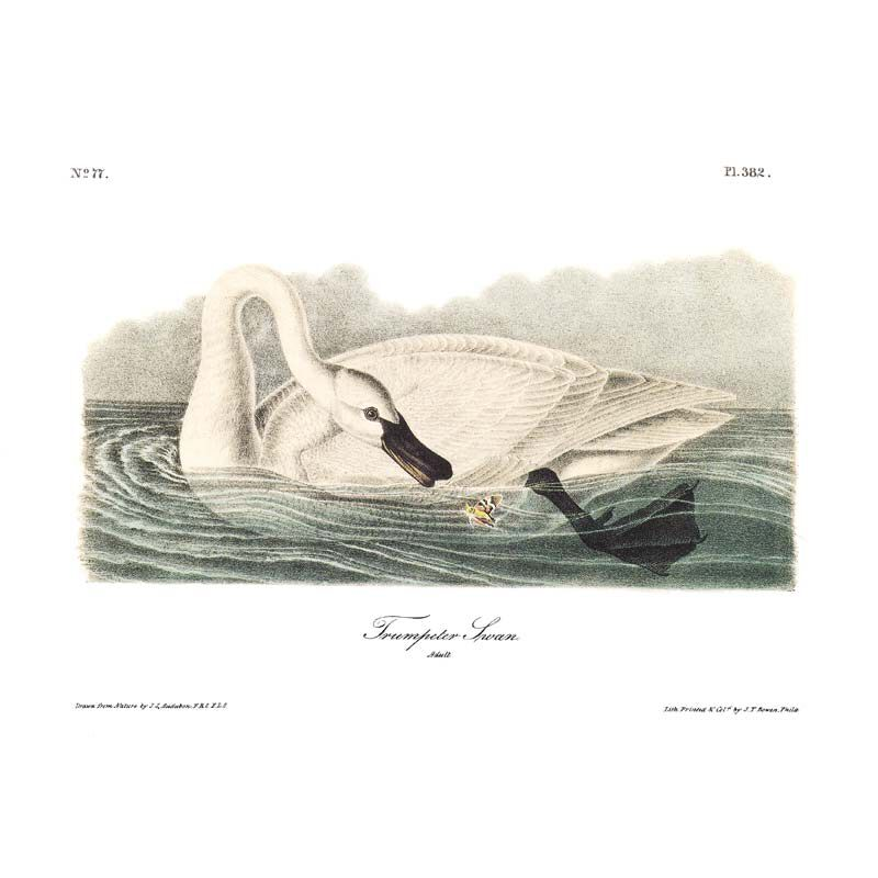 John James Audubons Birds of America 3201 16