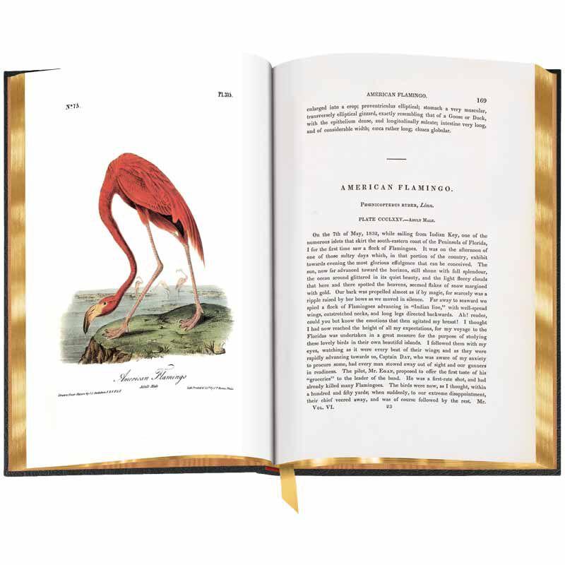 John James Audubons Birds of America 3201 6