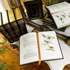 John James Audubons Birds of America 3201 4