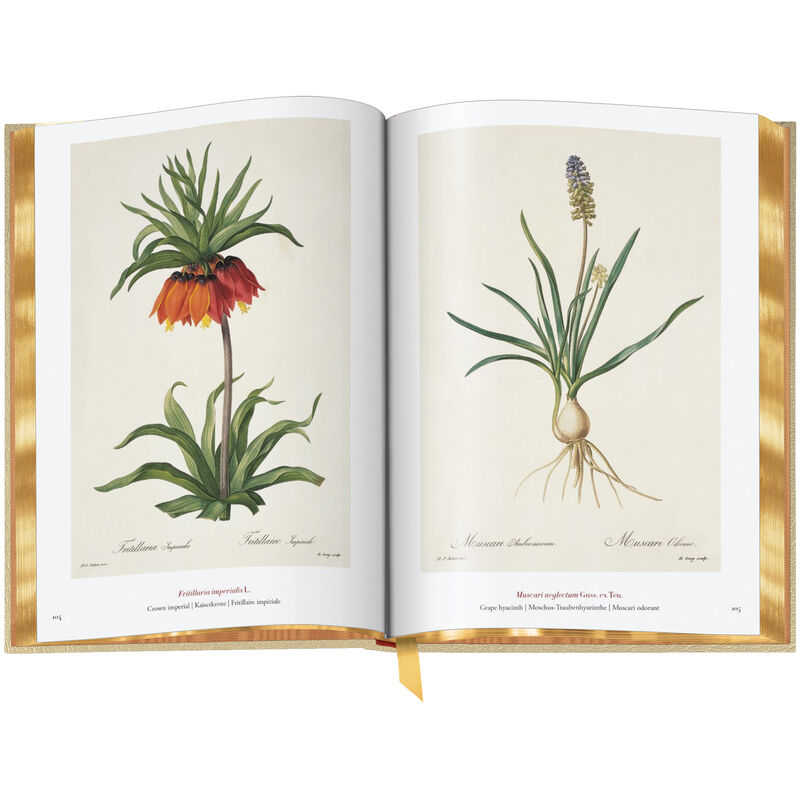 Book of Flowers 3704 c spr2 WEB