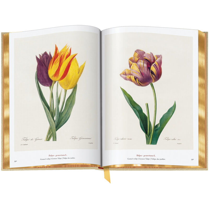 Book of Flowers 3704 g spr6 WEB