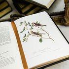 John James Audubons Birds of America 3201 5