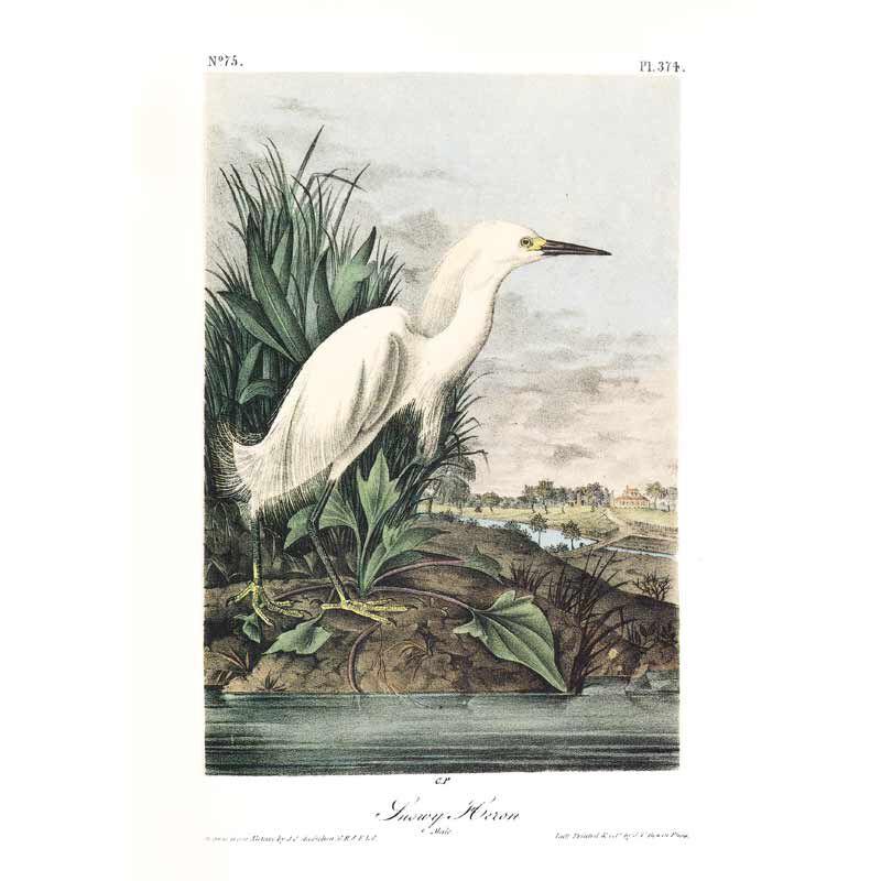 John James Audubons Birds of America 3201 14